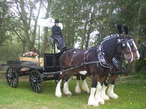 Horse Drawn Funeral Dray, Drawn by 2 Shire Horses