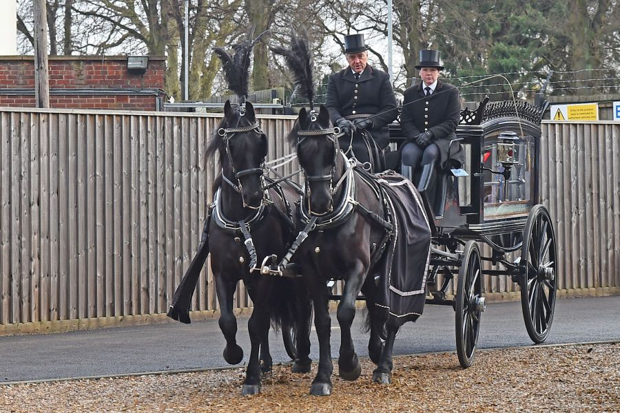 Victorian Horse drawn hearse - team of 2 or 4 Belgian Black Horses