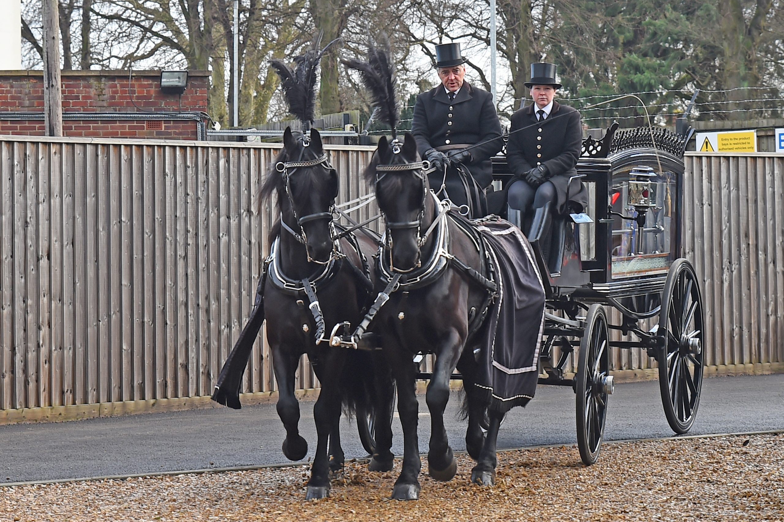 Victorian Horse drawn hearse - team of 2 or 4 Belgian Black Horses-1